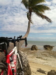 Jenn's bike enjoying the view, while resting against a palm tree.