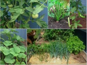 Garden July 9 2014