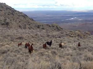 WIlsons Peak wild horses